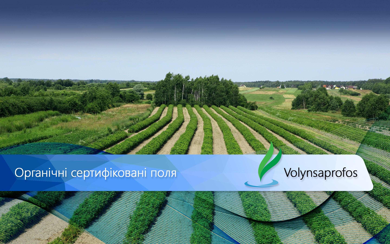 2-поле-Органічні-сертифіковані-поля